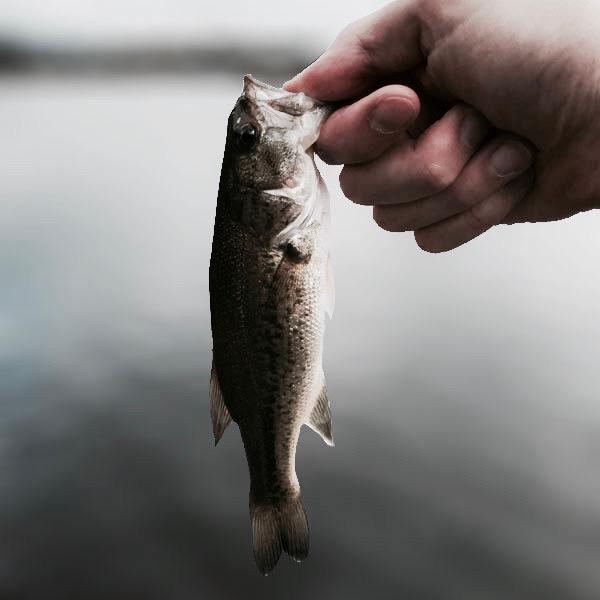 GWバス釣り釣行記4