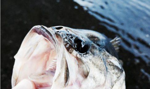 「河口湖のニジマス釣り」が楽しい!冬の河口湖へ行ってきました。ブラックバスも!