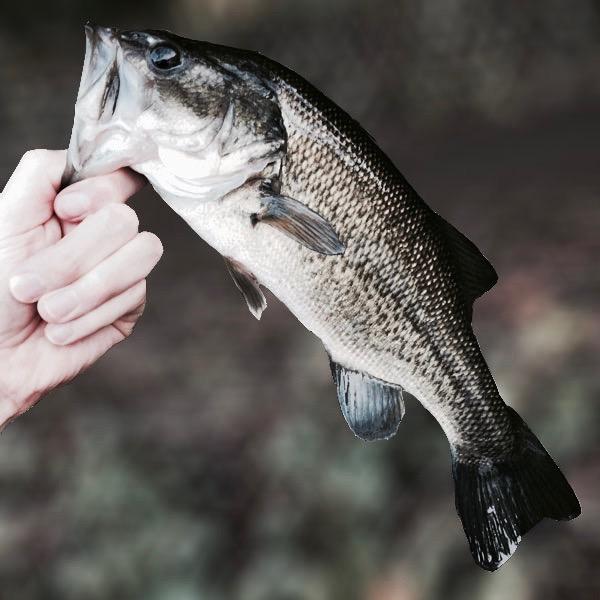 GWバス釣り釣行記5