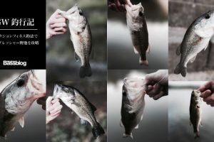 「GWバス釣り釣行記」ハイプレッシャーの小規模野池を「リアクションフィネス釣法」で攻略してきた。