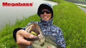 メガバスの「ニューグリフォン」と「ゴング」を使った野池の実釣解説動画が公開!