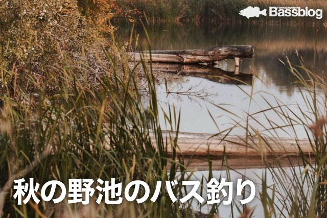 秋の野池のバス釣り